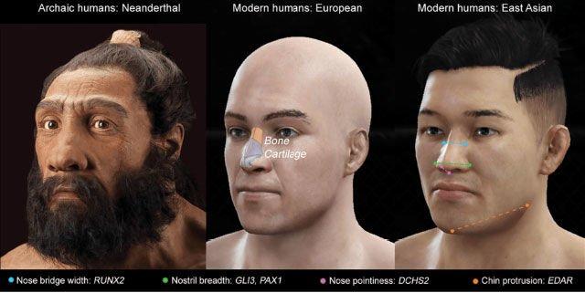 evolusi hidung