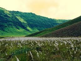 Padang Rumput Savana