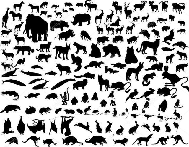 Berbagai spesies hewan