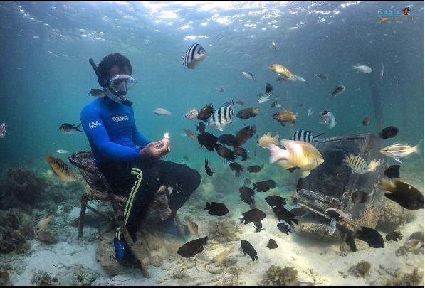 pemandangan bawah laut Pulau Petong