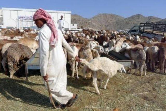 kurban, di arab sangatlah populer