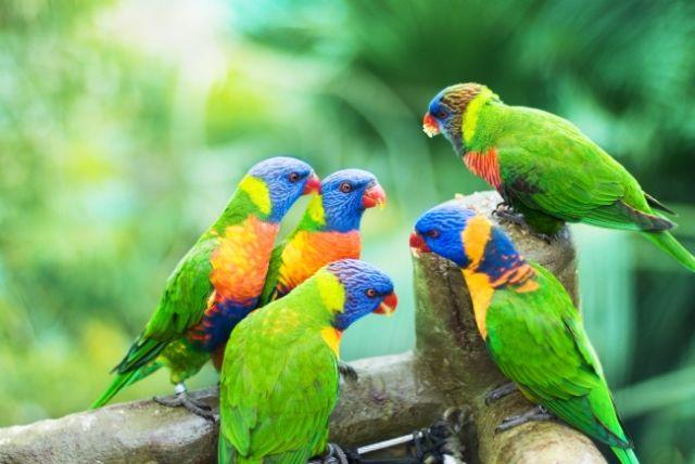 Apakah binatang juga berbicara dalam bahasa yang berbeda?