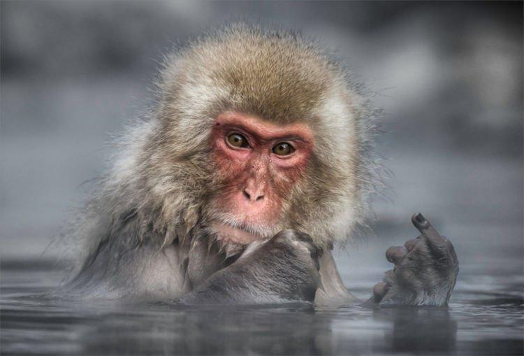 12+ Foto Pemenang Kompetisi Fotografi Comedy Wildlife Ini Keren dan Lucu Abis!