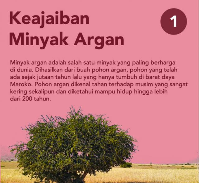 Pohon Argania