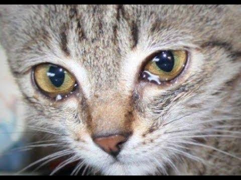 Viral Video Kucing Makan Sambil Nangis. Sebelum Ikut Baper, Intip 5 Fakta Soal Tangisan Hewan Ini