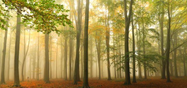 Ashridge Wood