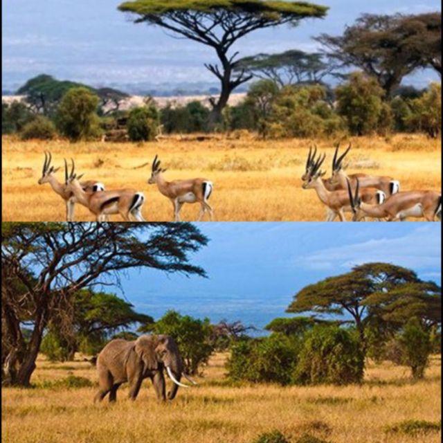 Taman Nasional Baluran & Amboseli National Park