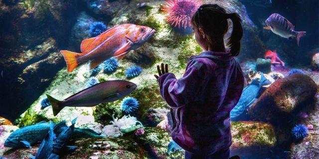 Ikan Peliharaan